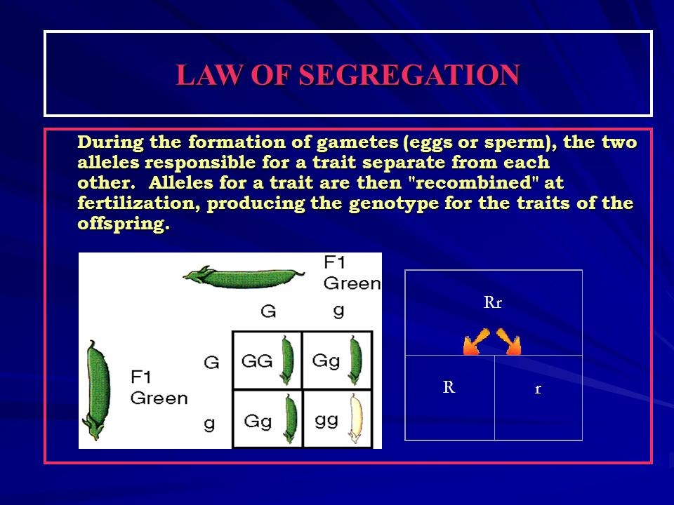 LAW OF SEGREGATION During the formation of gametes (eggs or sperm), the two alleles responsible for a trait separate from each other. Alleles for a tr
