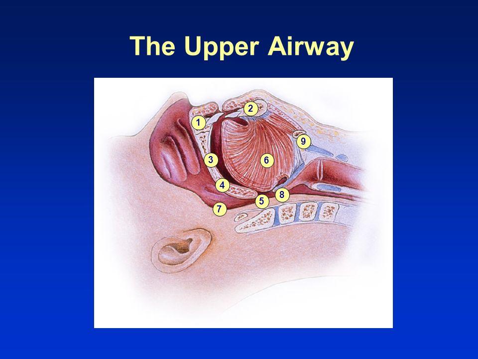 1 2 3 4 5 6 7 8 9 The Upper Airway