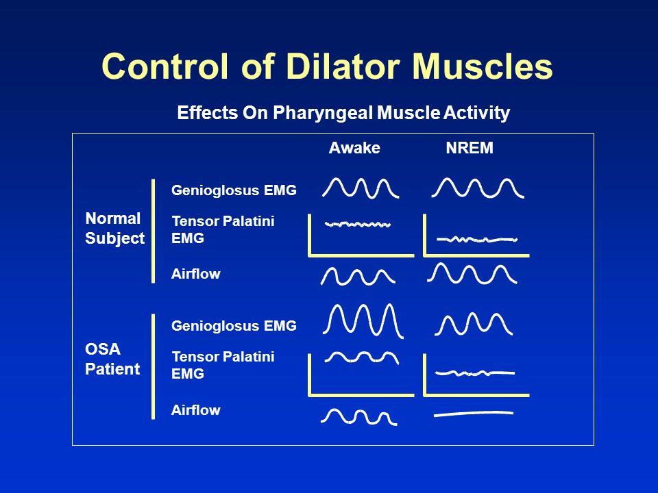 Control of Dilator Muscles Effects On Pharyngeal Muscle Activity Normal Subject Awake OSA Patient NREM Genioglosus EMG Tensor Palatini EMG Airflow Gen