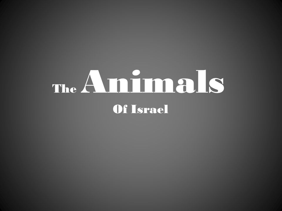 The Animals Of Israel