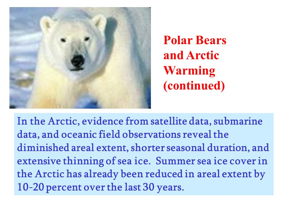 Polar Bears and Arctic Warming (continued) In the Arctic, evidence from satellite data, submarine data, and oceanic field observations reveal the dimi