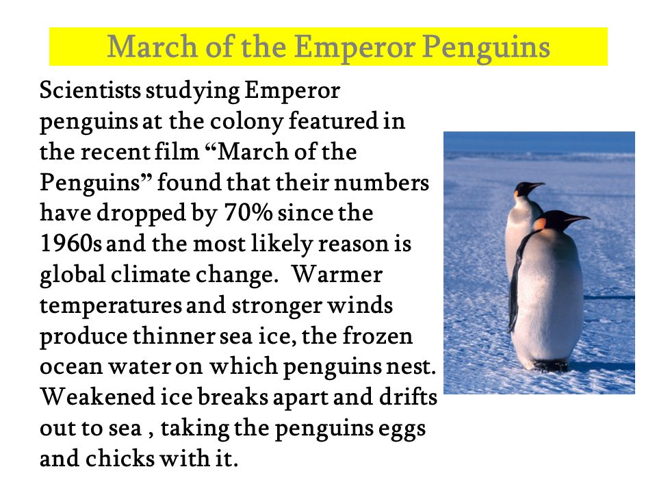March of the Emperor Penguins Scientists studying Emperor penguins at the colony featured in the recent film March of the Penguins found that their nu
