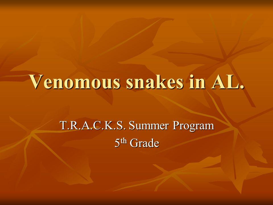 Pigmy Rattlesnake Gray with black and orange dots Gray with black and orange dots Found in North AL.