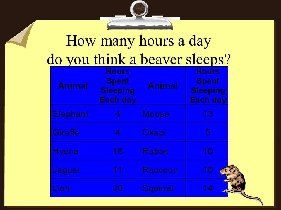 How many hours a day do you think a beaver sleeps?