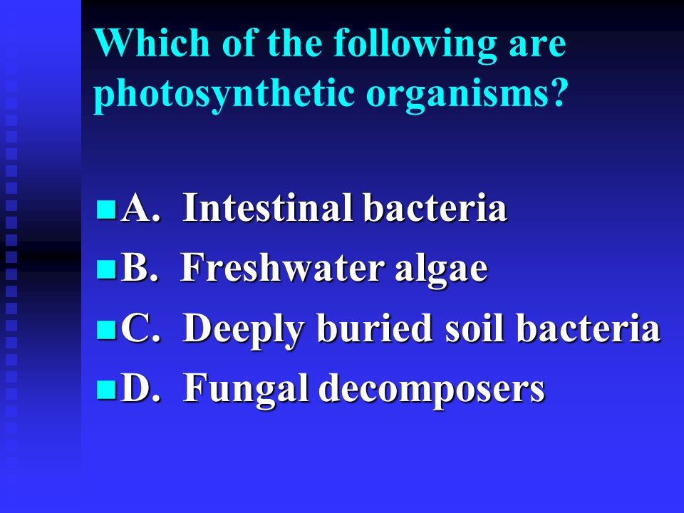 Which of the following are photosynthetic organisms? A. Intestinal bacteria A. Intestinal bacteria B. Freshwater algae B. Freshwater algae C. Deeply b