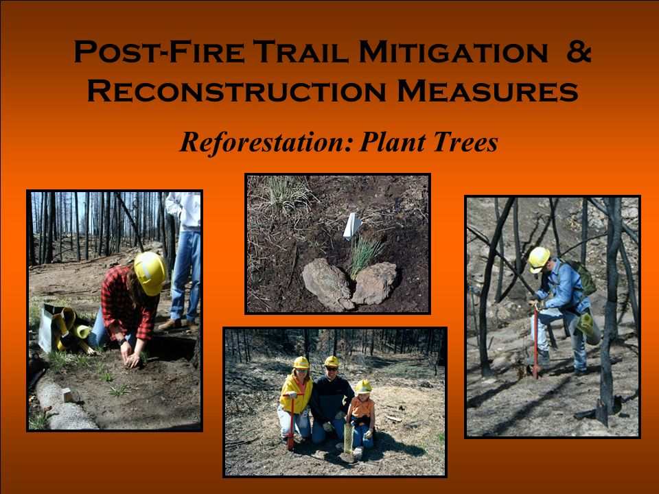 Post-Fire Trail Mitigation & Reconstruction Measures Reforestation: Plant Trees