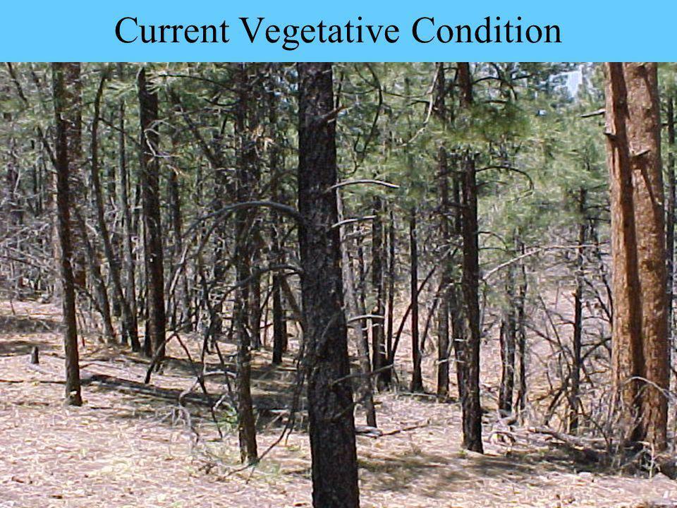 Current Vegetative Condition