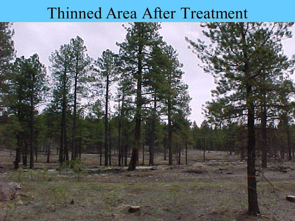 Thinned Area After Treatment