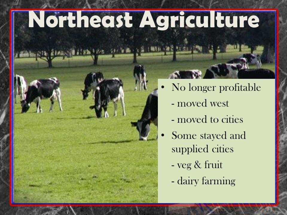 Northeast Agriculture No longer profitable - moved west - moved to cities Some stayed and supplied cities - veg & fruit - dairy farming