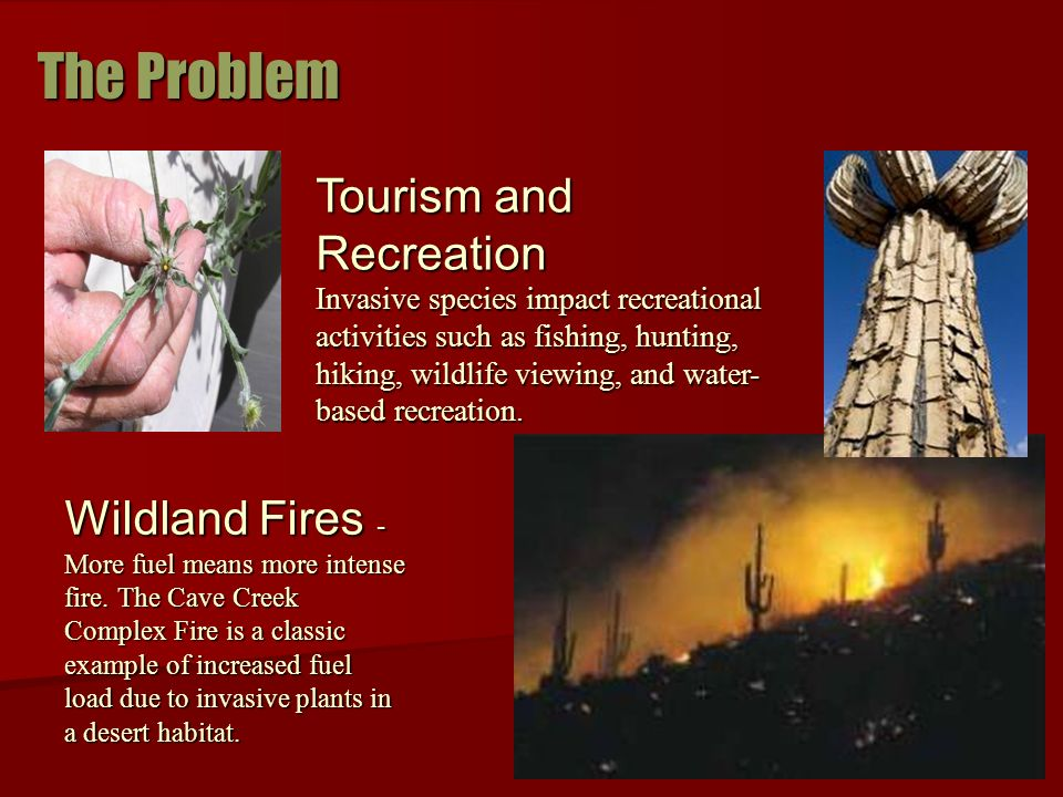 Wildland Fires - More fuel means more intense fire.