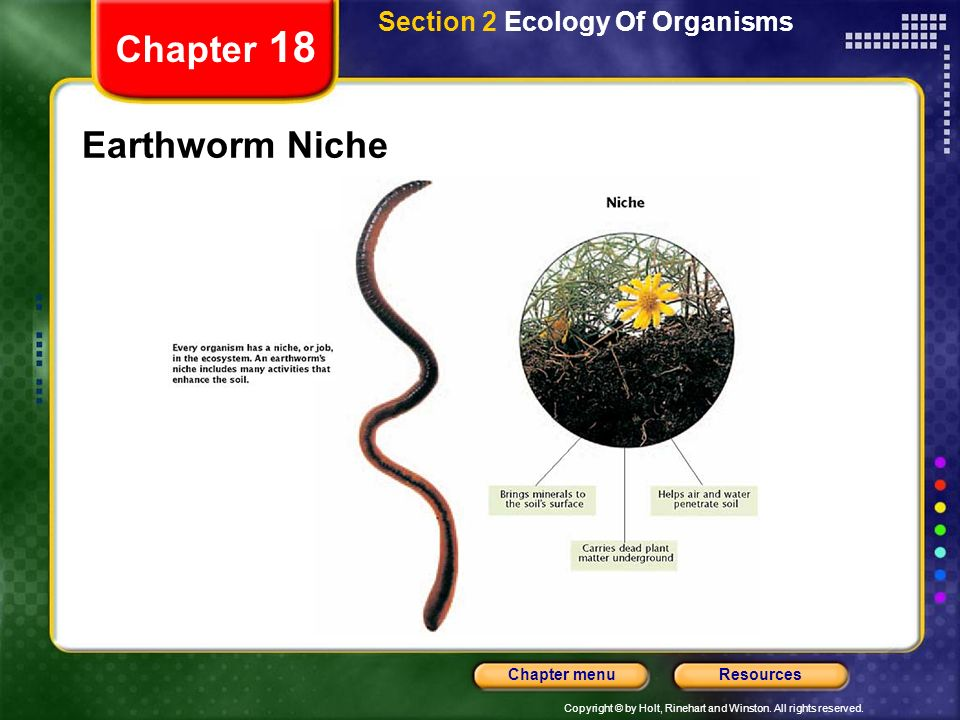 Copyright © by Holt, Rinehart and Winston. All rights reserved. ResourcesChapter menu Section 2 Ecology of Organisms Chapter 18 The Niche A niche is a