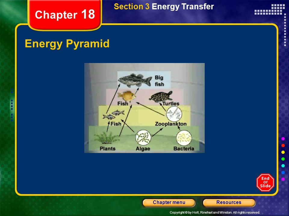 Copyright © by Holt, Rinehart and Winston. All rights reserved. ResourcesChapter menu Chapter 18 Energy Transfer Through Trophic Levels Section 3 Ener