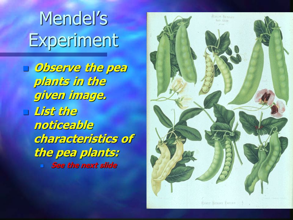 Mendel s Results and Conclusions n The Law of Segregation –The law of segregation states that a pair of factors is segregated, or separated, during the formation of gametes.