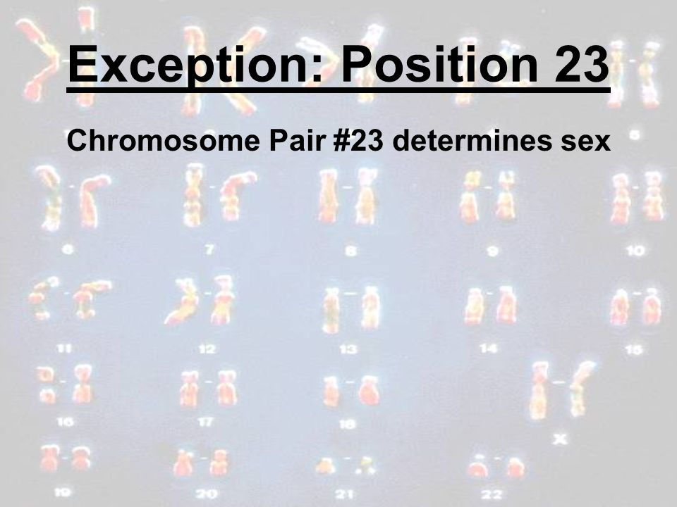 Exception: Position 23 Chromosome Pair #23 determines sex