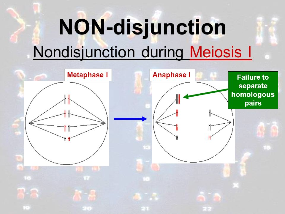 NON-disjunction Nondisjunction during Meiosis I Metaphase IAnaphase I Failure to separate homologous pairs