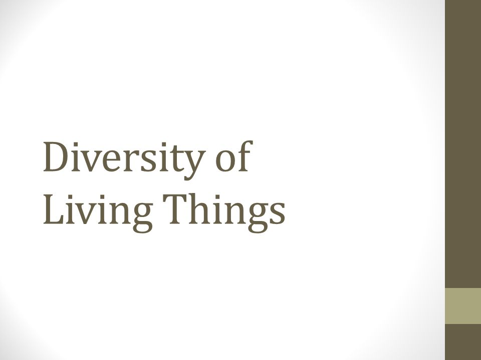 What is diversity? In small groups, create your own definition of diversity