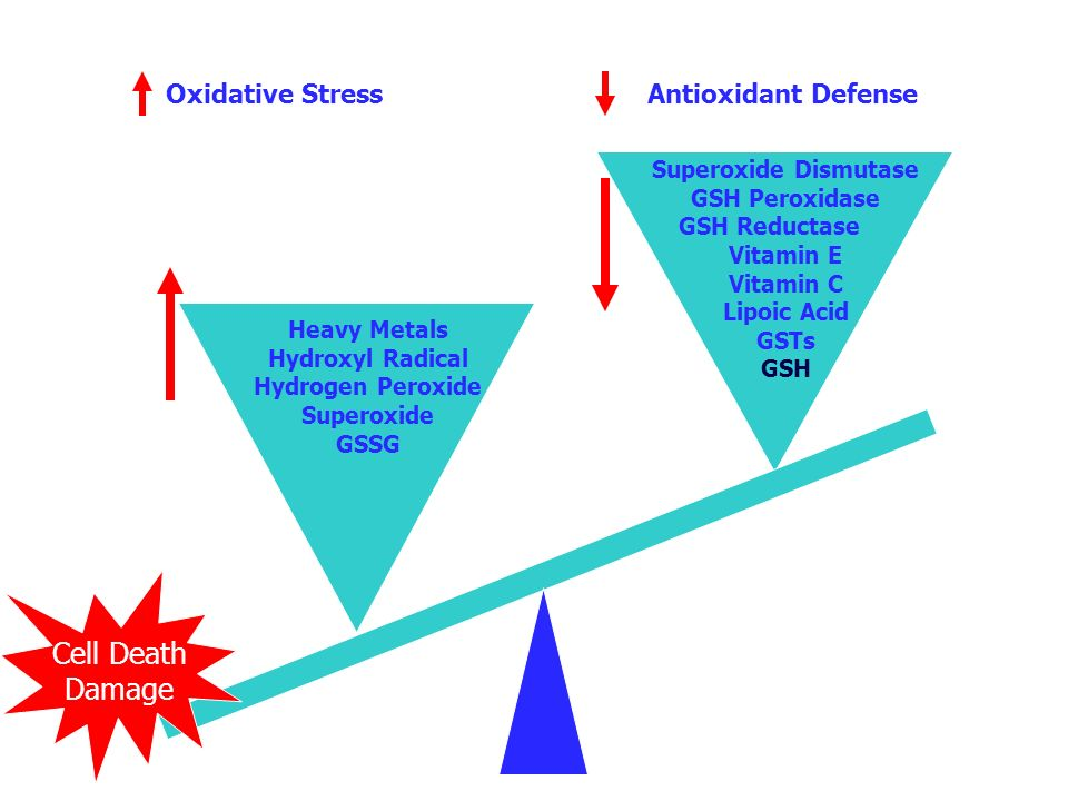Oxidative Stress Antioxidant Defense Superoxide Dismutase GSH Peroxidase GSH Reductase Vitamin E Vitamin C Lipoic Acid GSTs GSH Heavy Metals Hydroxyl