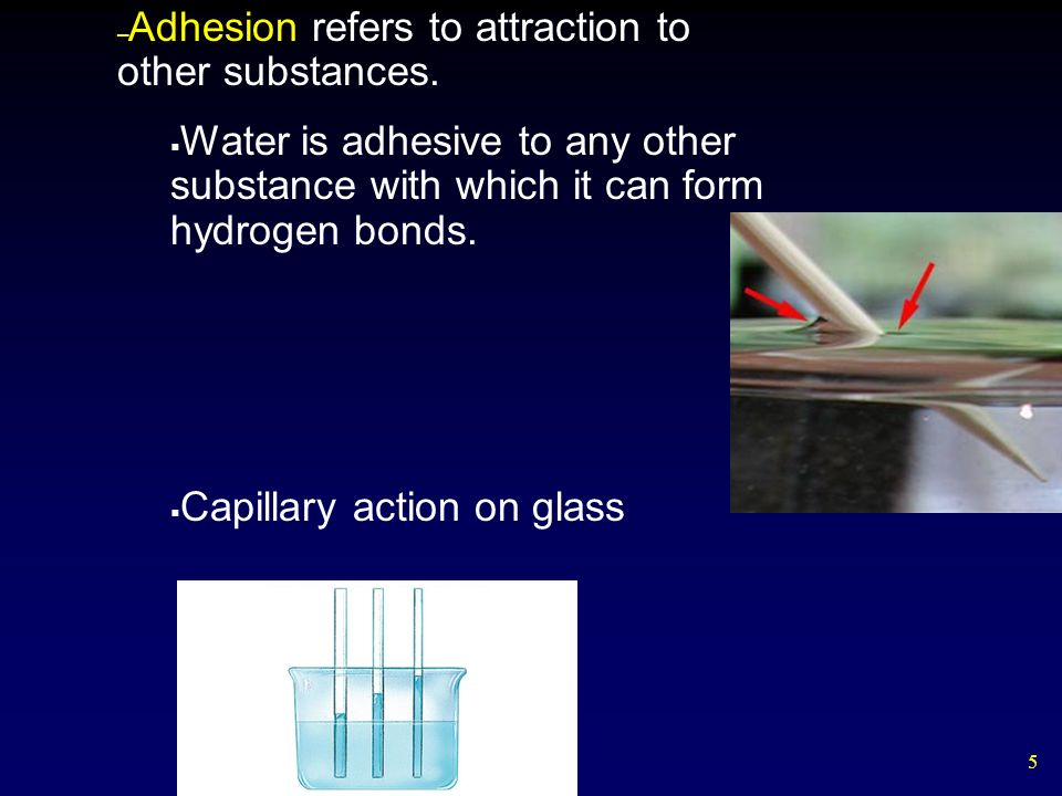 5 – Adhesion refers to attraction to other substances.