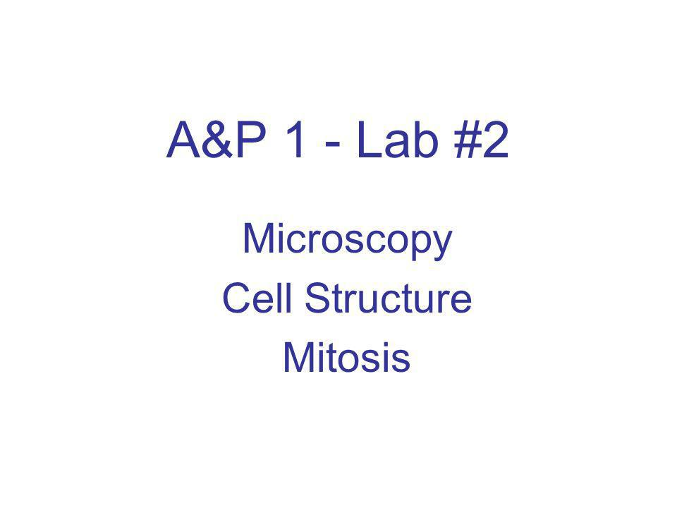 A&P 1 - Lab #2 Microscopy Cell Structure Mitosis