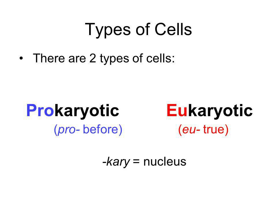 Types of Cells There are 2 types of cells: Prokaryotic Eukaryotic (pro- before) (eu- true) -kary = nucleus