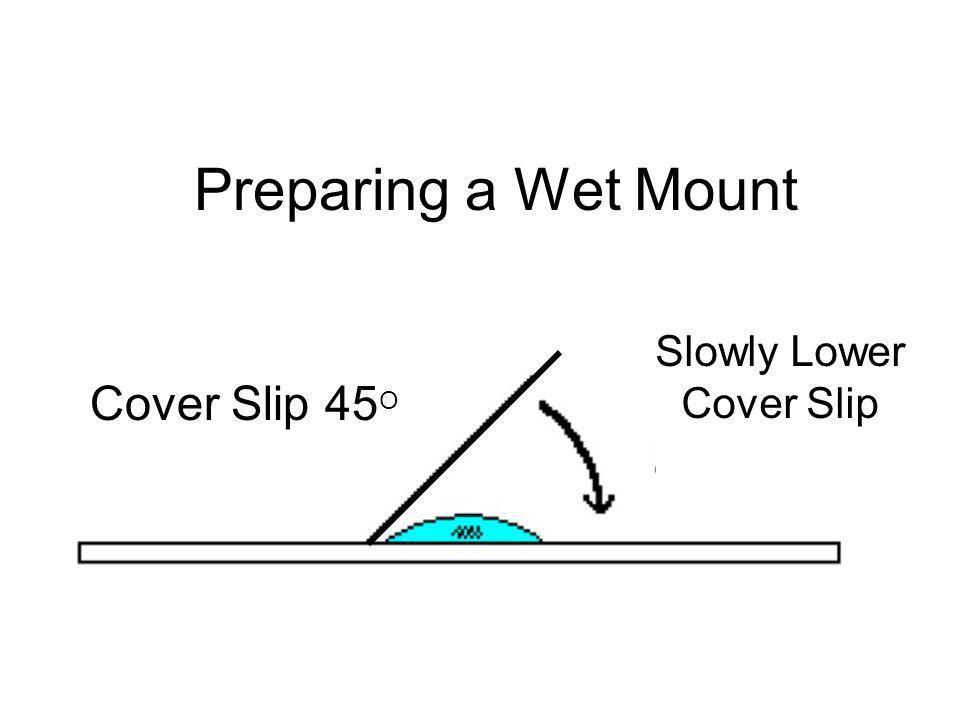 Preparing a Wet Mount Cover Slip 45 O Slowly Lower Cover Slip