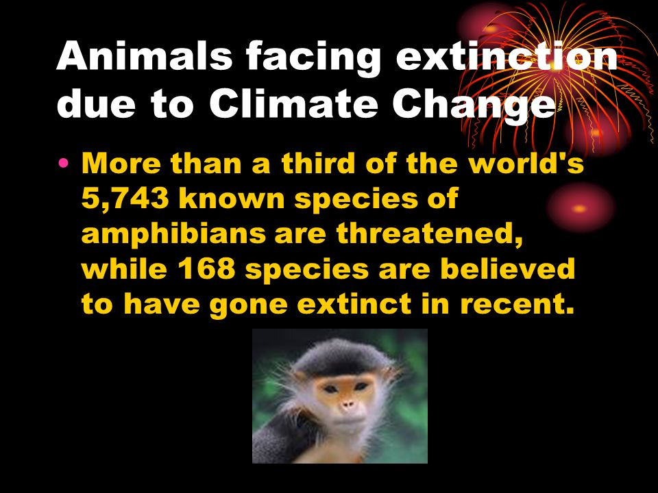 Animals facing extinction due to Climate Change More than a third of the world s 5,743 known species of amphibians are threatened, while 168 species are believed to have gone extinct in recent.