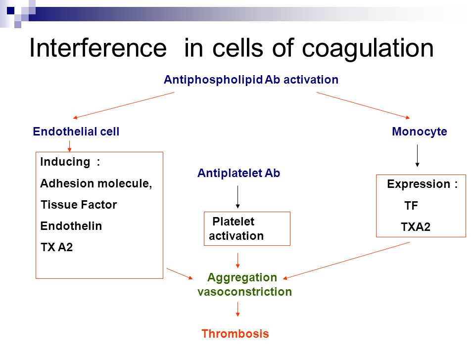 Interference in cells of coagulation Antiphospholipid Ab activation Endothelial cell Inducing : Adhesion molecule, Tissue Factor Endothelin TX A2 Mono