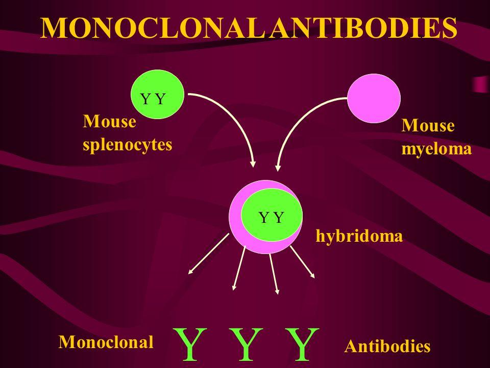 MONOCLONAL ANTIBODIES Mouse splenocytes Mouse myeloma hybridoma Y Y Y Monoclonal Y Antibodies Y