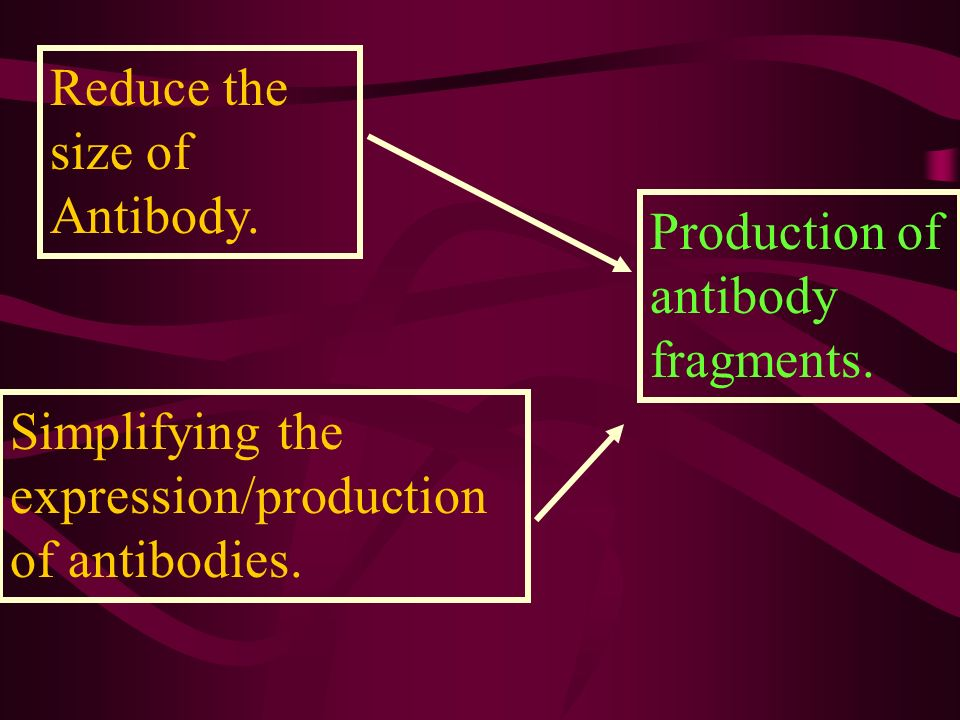 Reduce the size of Antibody. Production of antibody fragments. Simplifying the expression/production of antibodies.
