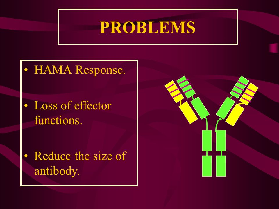 PROBLEMS HAMA Response. Loss of effector functions. Reduce the size of antibody.