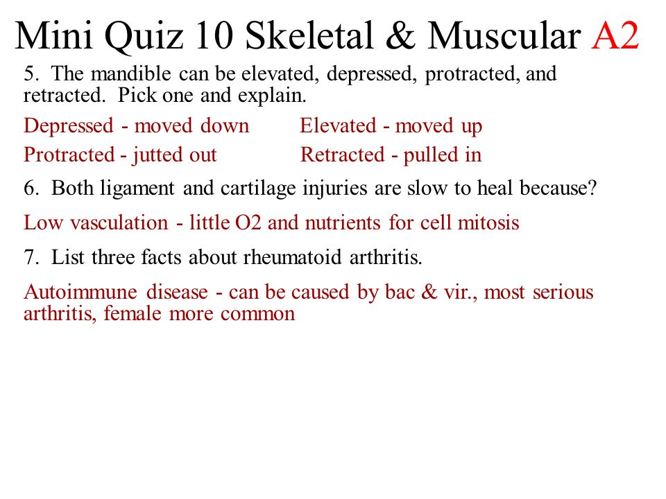 Mini Quiz 10 Skeletal & Muscular A2 5.