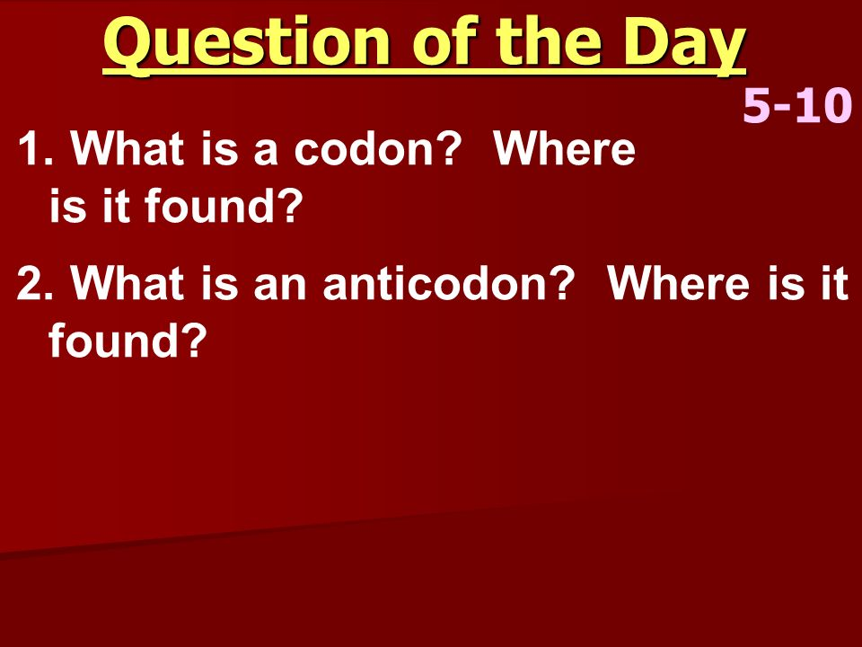 Question of the Day 5-10 1. What is a codon? Where is it found? 2. What is an anticodon? Where is it found?