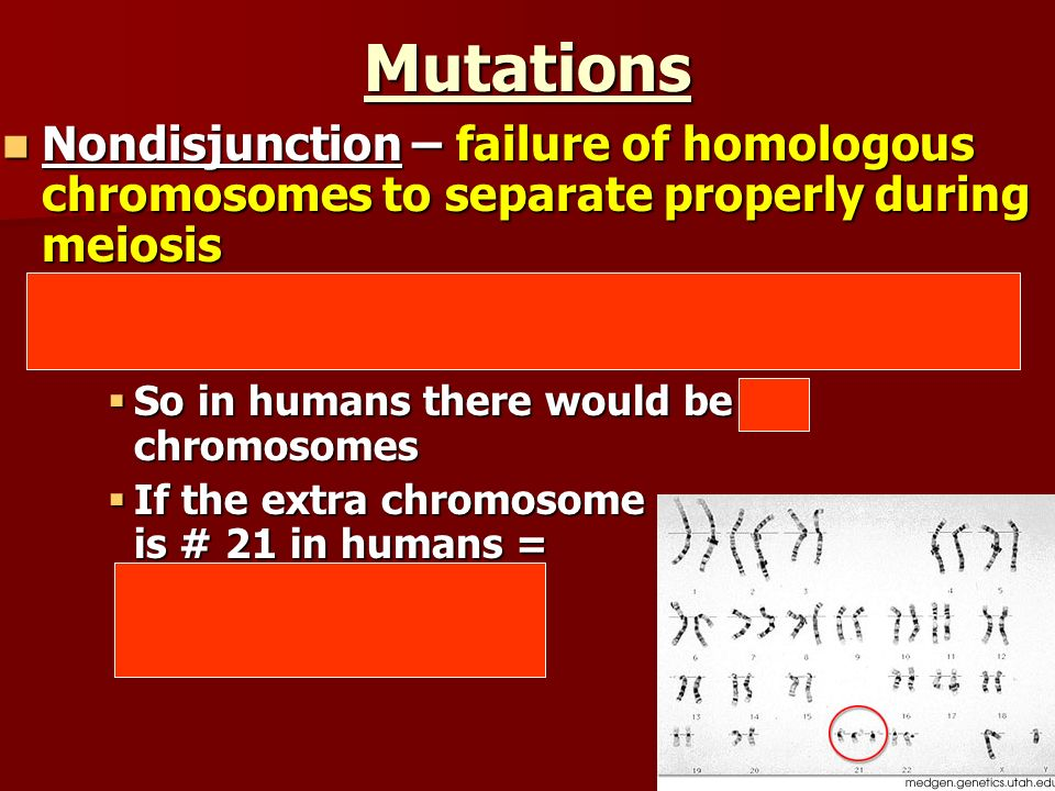 Mutations Nondisjunction – failure of homologous chromosomes to separate properly during meiosis Nondisjunction – failure of homologous chromosomes to