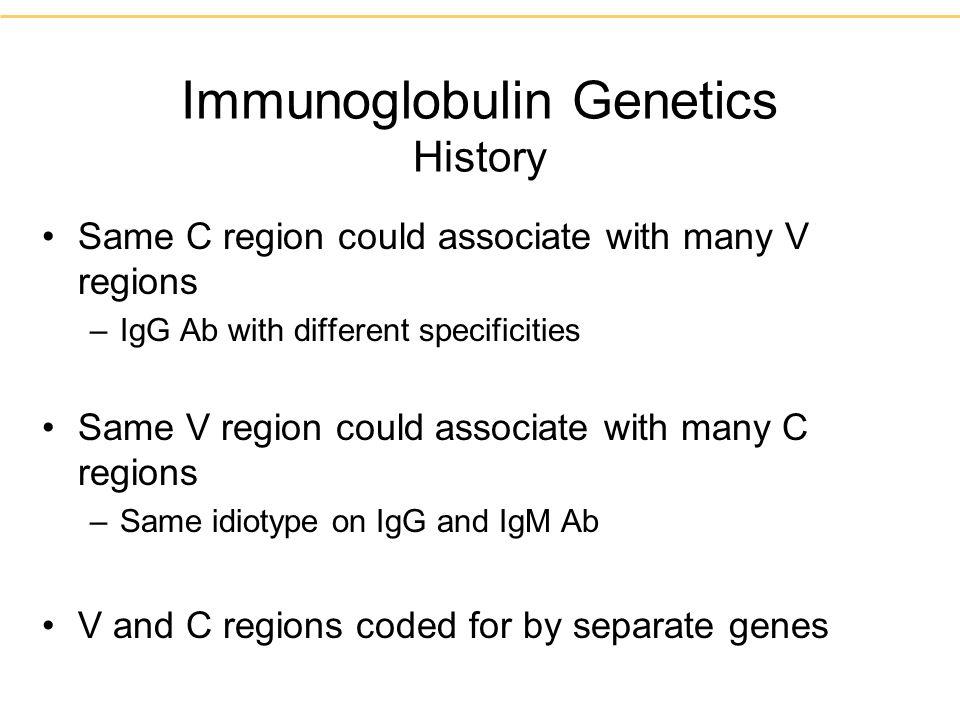 Immunoglobulin Genetics History Same C region could associate with many V regions –IgG Ab with different specificities Same V region could associate w