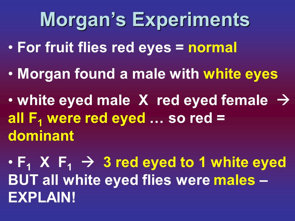 Morgans Experiments For fruit flies red eyes = normal Morgan found a male with white eyes white eyed male X red eyed female all F 1 were red eyed … so