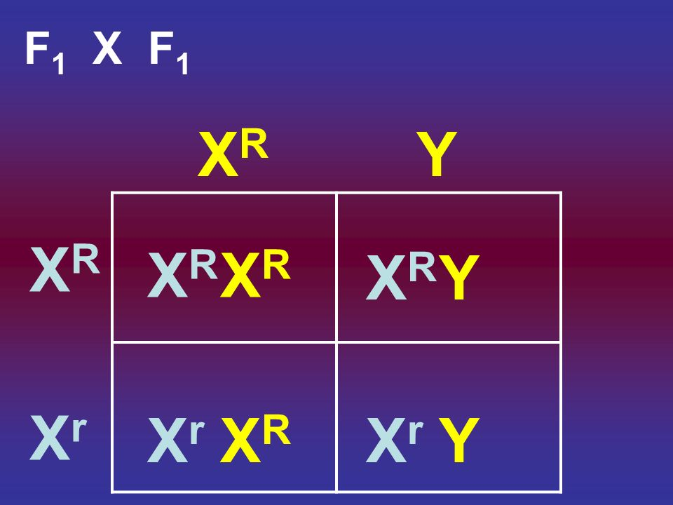 Review: Sex chromosomes – X and Y – chromosomes that contain genes that determine sex (along with other traits)Sex chromosomes – X and Y – chromosomes that contain genes that determine sex (along with other traits) Autosomes – all other chromosomes and the genes they carryAutosomes – all other chromosomes and the genes they carry