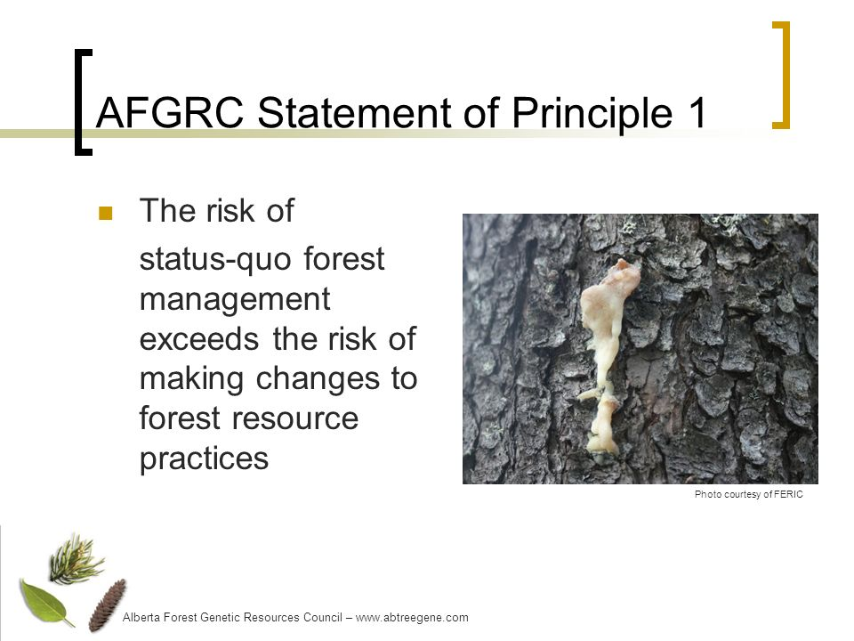 AFGRC Statement of Principle 1 The risk of status-quo forest management exceeds the risk of making changes to forest resource practices Alberta Forest Genetic Resources Council – www.abtreegene.com Photo courtesy of FERIC