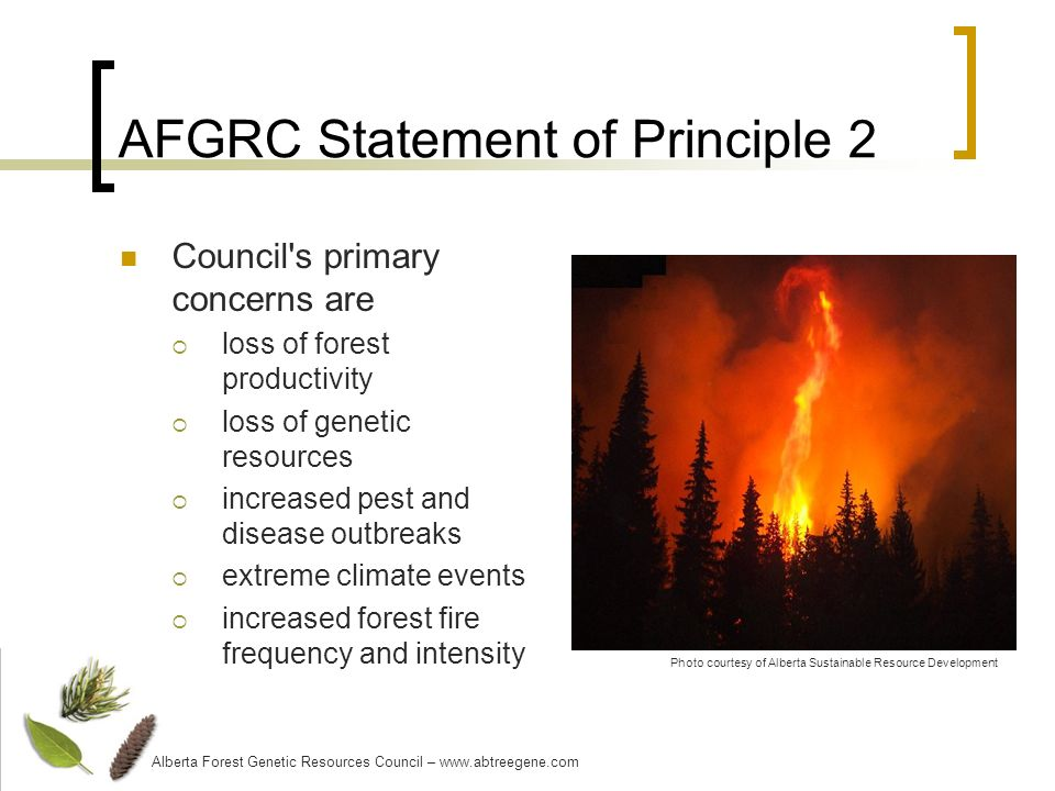 AFGRC Statement of Principle 2 Council s primary concerns are loss of forest productivity loss of genetic resources increased pest and disease outbreaks extreme climate events increased forest fire frequency and intensity Alberta Forest Genetic Resources Council – www.abtreegene.com Photo courtesy of Alberta Sustainable Resource Development