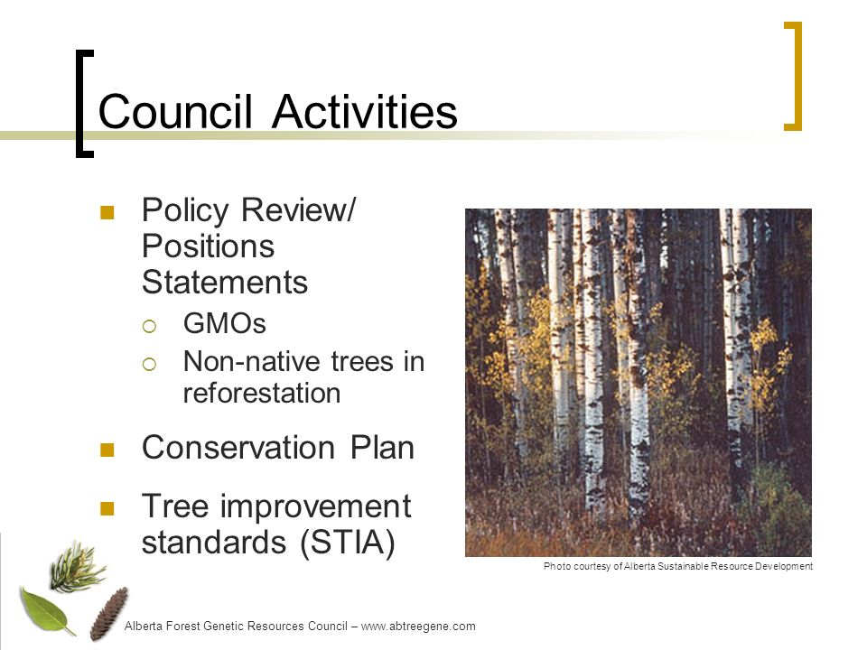 Council Activities Policy Review/ Positions Statements GMOs Non-native trees in reforestation Conservation Plan Tree improvement standards (STIA) Photo courtesy of Alberta Sustainable Resource Development Alberta Forest Genetic Resources Council – www.abtreegene.com