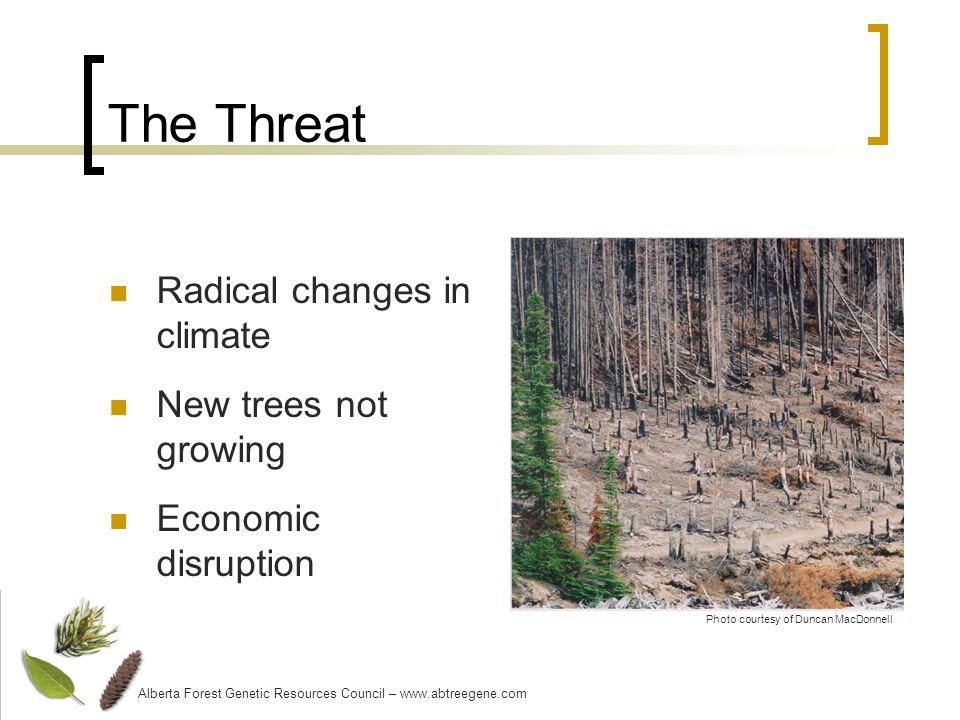 The Threat Radical changes in climate New trees not growing Economic disruption Alberta Forest Genetic Resources Council – www.abtreegene.com Photo courtesy of Duncan MacDonnell