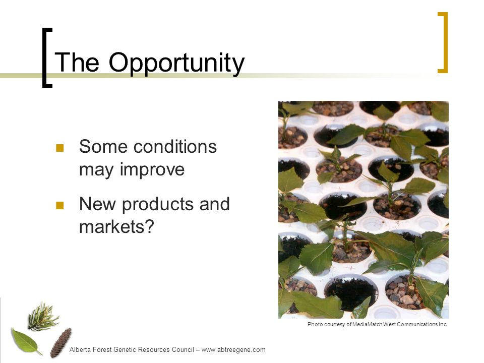 The Opportunity Some conditions may improve New products and markets.