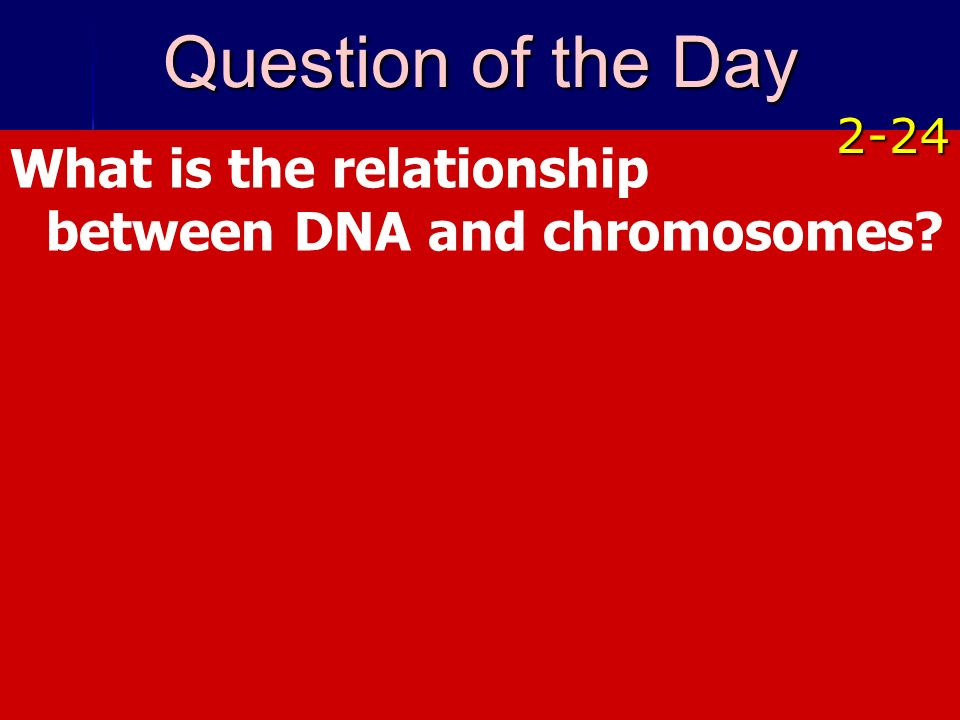 Copyright © by Holt, Rinehart and Winston. All rights reserved. What is the relationship between DNA and chromosomes? Question of the Day 2-24