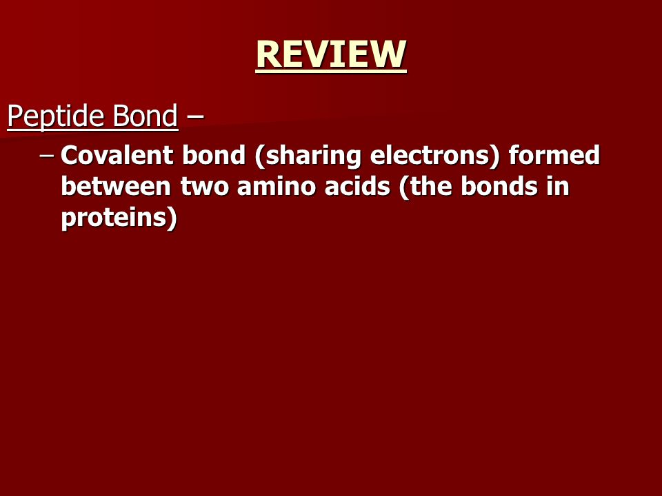 REVIEW Peptide Bond – –Covalent bond (sharing electrons) formed between two amino acids (the bonds in proteins)