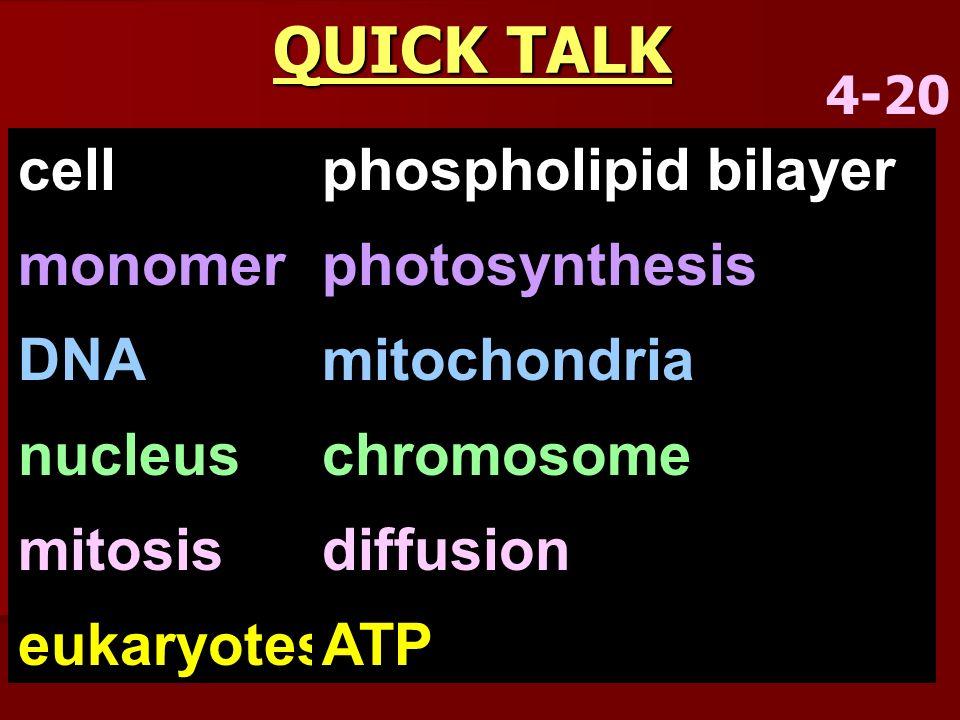 QUICK TALK 4-20 cell monomer DNA nucleus mitosis eukaryotes phospholipid bilayer photosynthesis mitochondria chromosome diffusion ATP