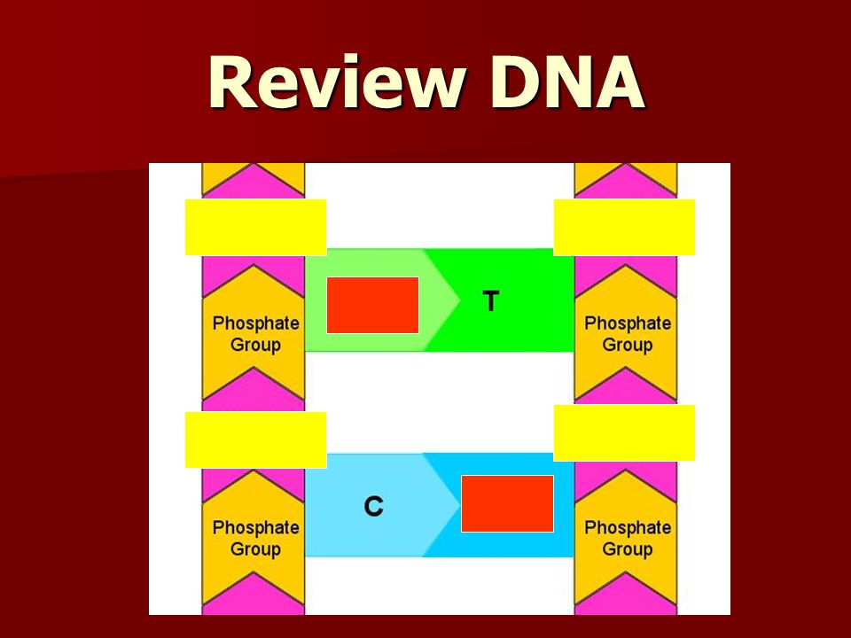 Review DNA