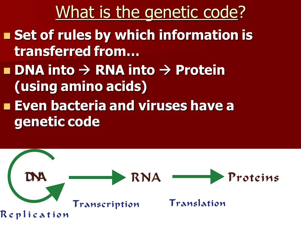 What is the genetic code? Set of rules by which information is transferred from… Set of rules by which information is transferred from… DNA into RNA i