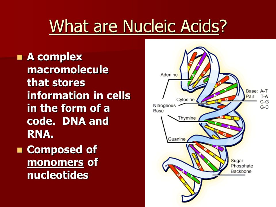 What are Nucleic Acids? A complex macromolecule that stores information in cells in the form of a code. DNA and RNA. A complex macromolecule that stor