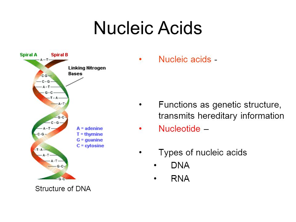 Nucleic Acids Nucleic acids - macromolecule containing hydrogen, oxygen, nitrogen, carbon, and phosphorous. Functions as genetic structure, transmits