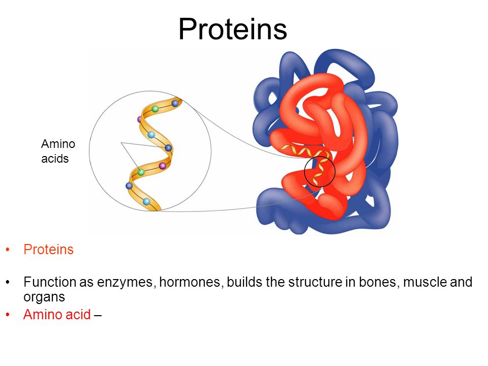 Proteins Proteins macromolecule that contains carbon, hydrogen, oxygen, and nitrogen Function as enzymes, hormones, builds the structure in bones, mus