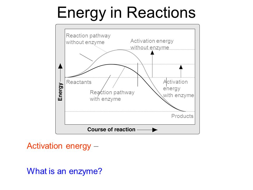 Reaction pathway without enzyme Activation energy without enzyme Activation energy with enzyme Reaction pathway with enzyme Reactants Products Energy